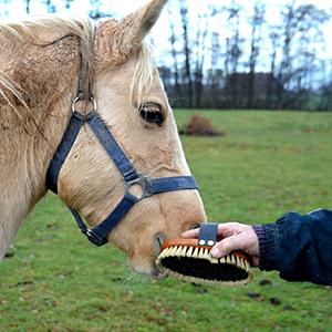 Szczotki do pielęgnacji koni